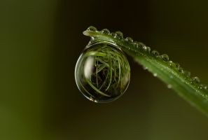 Natural Refraction 6 by Alliec