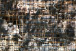 lattice and wall by almonsor-stock