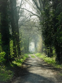Into the woods by LilyBeePhoto