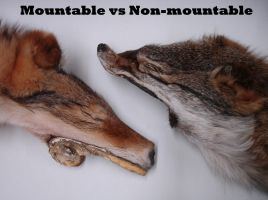 Mountable VS Non-Mountable by AcidConfetti