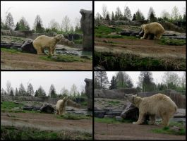 Polar bear by schaduwvacht