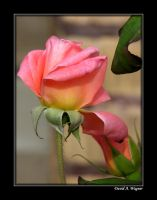 My October Garden Flowers II by David-A-Wagner