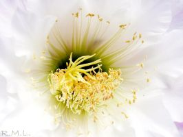 Flower 1 by Evicas