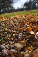 Carpet of Leaves and Seeds by erstucky