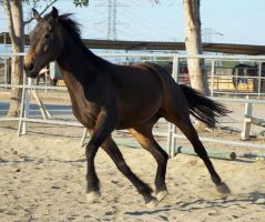 Horse 01 by Kabu-Stock