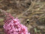 busy bee by candlejack1
