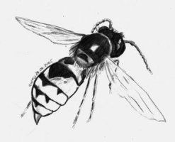 Wasp by artgrugster by Insect-Lovers-Club