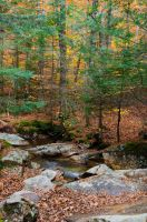 White Mountains  Fall Foliage  179 by FairieGoodMother