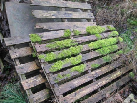 Grates With Moss by gothicgrl104