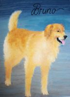 Golden Retriever Bruno by AlyssasART