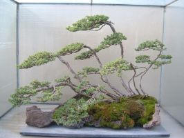 Bonsai 025 by aurochstock