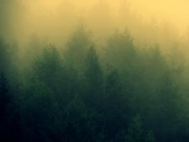 Fog and forest 4 by SniperSAKH