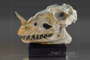 Dragonskull by MarcZieger