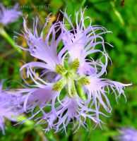 The Tortuous Flower by Cloudwhisperer67