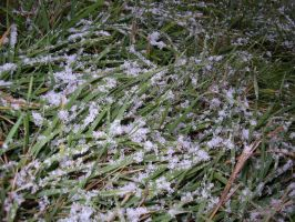 Frosted Grass by EbolaBearVomit