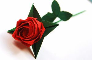 Classic Red Rose by lisadeng