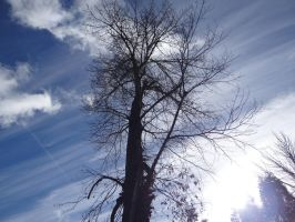 Tree and Sky Stripes by Whimseystock