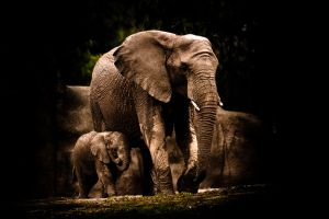 African Elephants by CarpathianWolf