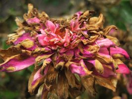 dying flower by DoubtfulSound