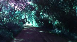 Forest Road (altered hues) by AniaBuckle