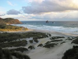 The Beach, Sandfly Bay, Dunedin, New Zealand by Guppy0031
