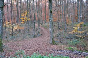 forest path autumn by marlene-stock