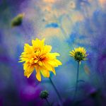 yellow by BaxiaArt