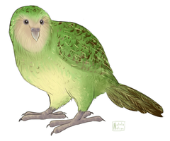 Kakapo by SailingBreezes
