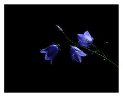 Bluebell by Cathorse