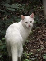White Kitty by LadyxBoleyn