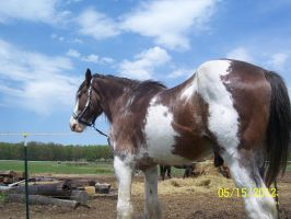 clydesdale possible stock by ArtisinmyHeart