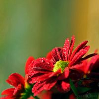 Explosion of Life by WhiteBook
