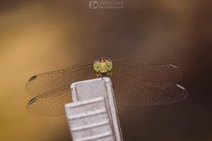 Dragonfly by aleexdee