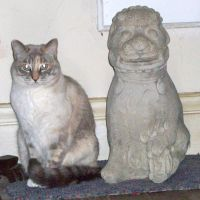 Dust Bunny makes friends with the Foo Dog. If they by reretiger