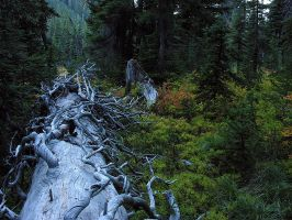 Log_Hell Roaring Meadows 9682 by photoguy17