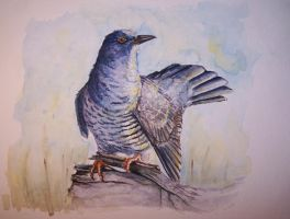 Cuckoo by Concini