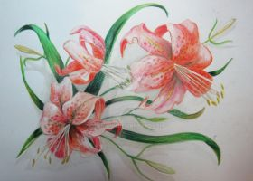Lilies by lonarin