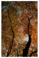 Fall Perspective by ashleytheHUNTER
