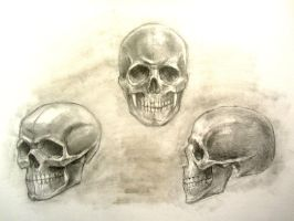 Skull Sketches by taylorweaved
