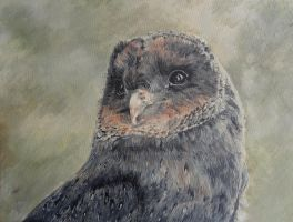 Coal the Melanistic Barn owl - finished work! by Merciap