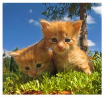 Kitty twins by maccarta