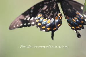 she who dreams of their wings by Laur720