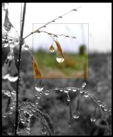 Drops by dolly41