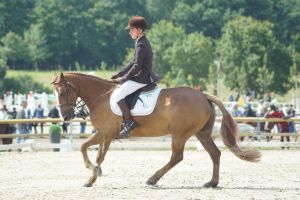 Chestnut Pony - Eventing stock 8.5 by MagicLecktra
