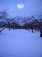 Winter Wonderland Stock 20 by SimplyBackgrounds