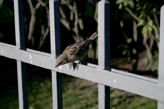 on the fence by steeerne