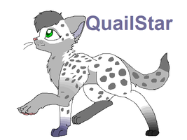 QuailStar by Rave-Star