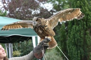 Rambo the Eagle Owl 2.0 by RaeyenIrael-Stock