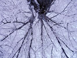 From under the frozen trees by Betagalactosidase