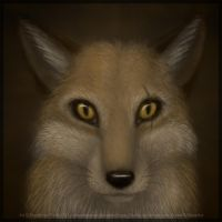 The real Beren by VulpesObscurus